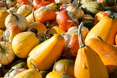 Orange pumpkins Stock Photo - 15562685