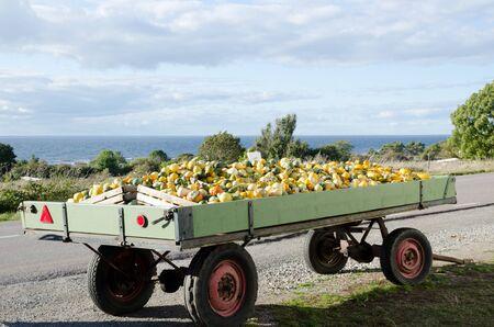 Pumpkin wagon at the road Stock Photo - 15562684