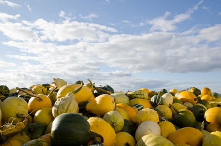 Stack of green and yellow pumpkins Stock Photo - 15562682