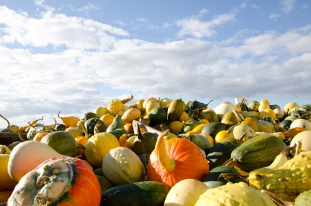 Stack of colored pumpkins Stock Photo - 15562680