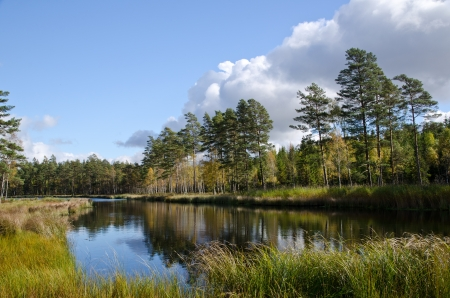 Lake in the forest Stock Photo - 15796493