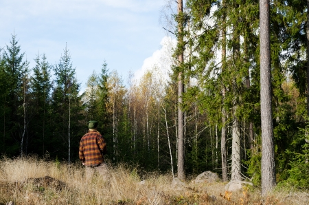 Man inspecting trees in forest