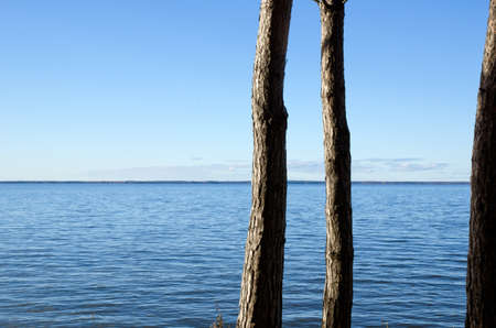 pine three: Three pine trunks at coast Stock Photo