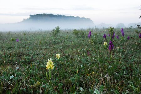oland: Orchids in misty landscape