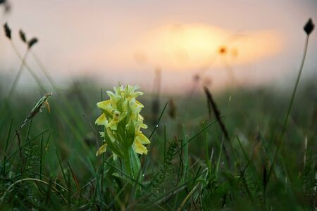 Orchid in misty sunset photo