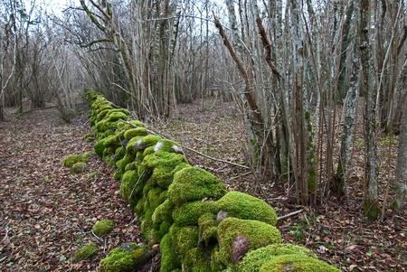 Mossy stonewall Stock Photo - 17275198