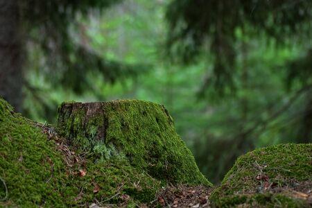Green stump Stock Photo - 17275154