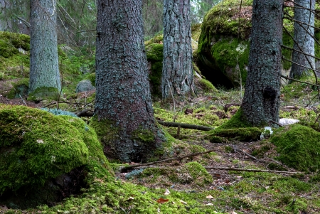 Trunks in mossy forest Stock Photo - 17275199