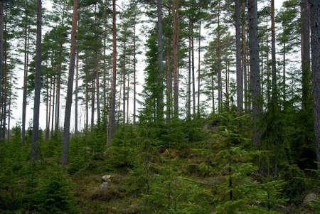 Nordic woodland Stock Photo - 17275190