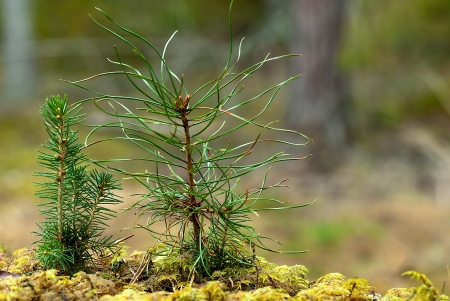 Tree seedlings Stock Photo - 17275172