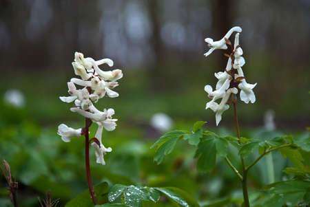 White flowers Stock Photo - 17275252