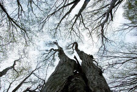 Trees to the sky Stock Photo - 17275358