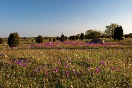 Purple wildflowers Stock Photo - 17275314