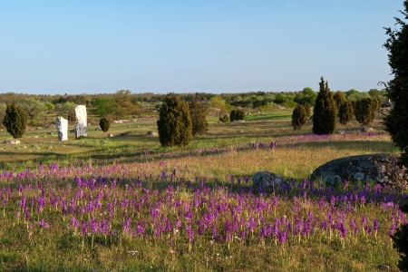 Wild orchids at ancient monument Stock Photo - 17275274