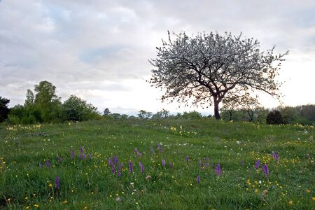 Spring Blossom Stock Photo - 17275264