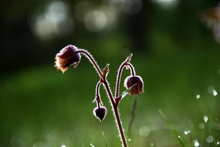 Flower in backlight Stock Photo - 17275253
