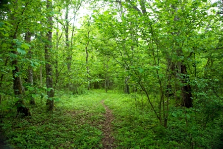 Green , green path Stock Photo - 17275349