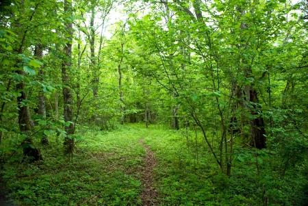 Green , green path Stock Photo - 17275349