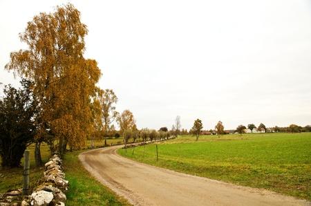 Autumn birch Stock Photo - 17442716