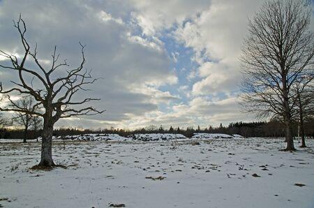 Winter trees Stock Photo - 17442708