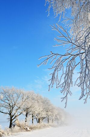 Hoar frost in the morning Stock Photo - 17443047
