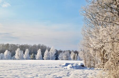 Hoar frost view Stock Photo - 17443156