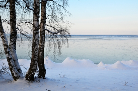 Birches at winter coast Stock Photo - 17443066