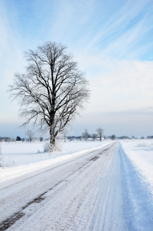 Tree at winter road Stock Photo - 17443068