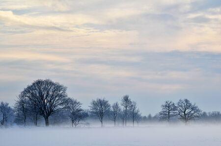 Misty and frosty day Stock Photo - 17452759