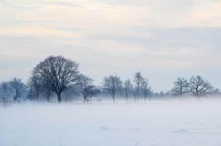 Misty day with hoarfrost Stock Photo - 17452760