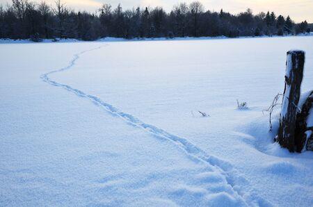 Wildlife tracks Stock Photo - 17443040