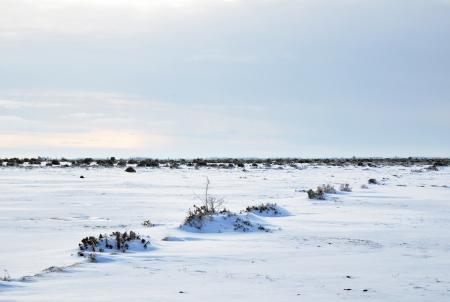 Unique winter landscape photo