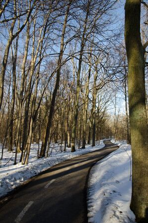 Winding bike trail through a forest at wintertime photo
