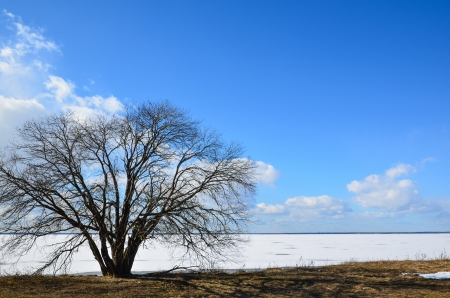 alder tree: Lone alder tree at coast in early springtime with ice still left on the lake Stock Photo