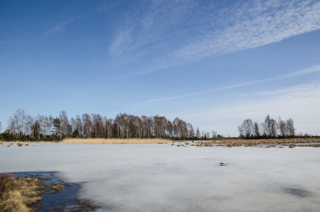 oland: Group of birches and reeds at a wetland with melting ice  From the Great Alvar Plain on the island à uFFFDland in the Baltic sea  Stock Photo