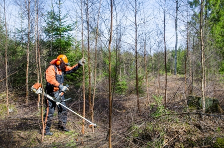 Man working with a brush cutter in a forest