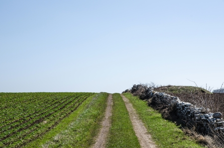 Farmers dirt road over a hill in a  rural landscape with green field  Stock Photo