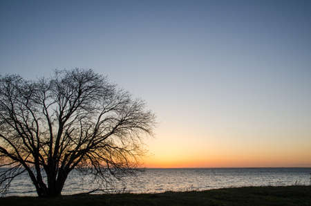 oland: Lone tree at sunset by the coast of the swedish island Oland in the Baltic sea  Stock Photo