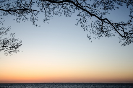 Silhouette on alder tree branches in evening light at the Baltic sea in Sweden photo