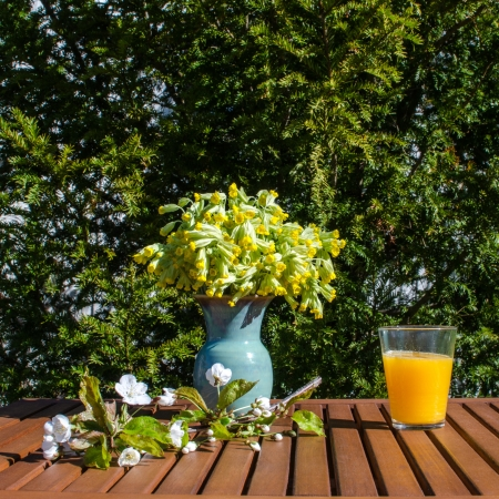 cowslip: Morning table in garden decorated with spring flowers and a twig of cherry blossom