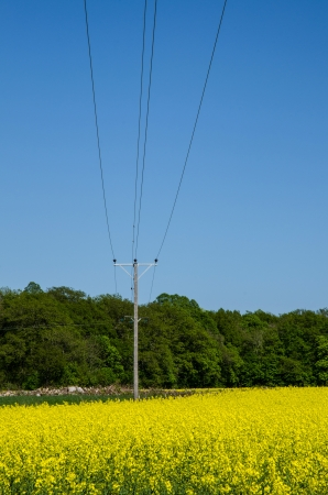 Electric lines and a pole at a blossom rape field with forest background  Stock Photo