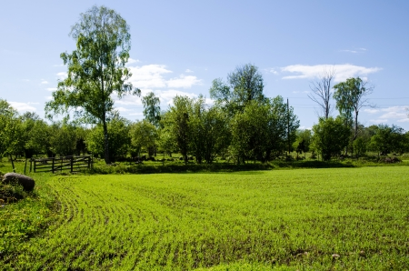 Green field of seedlings in rows and an old wooden gate  From the island Oland in Sweden  photo