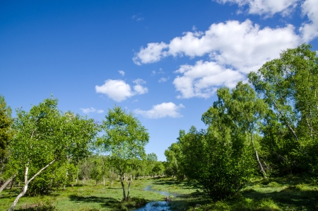 sweden resting: A small creek in a meadow landscape at springtime  From the island Oland in Sweden