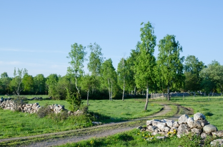 Summer evening at an idyllic rural landscape with dirt road and gate  From the island Oland in Sweden  photo