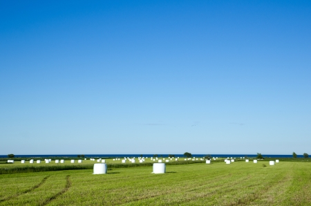 Wrapped haybales in a field by the coast of Baltic sea. From the island Oland in Sweden. photo