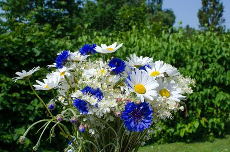 White and blue summerflowers at a green background Stock Photo - 20724547