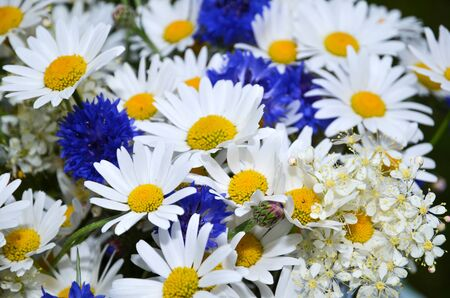 Closeup of blue and white summerflowers Stock Photo - 20724558
