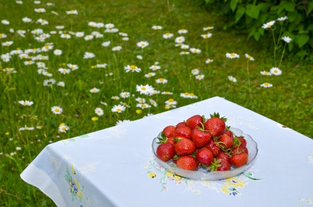 Strawberries in a bowl on a table outdorrs in garden with background of daisies Stock Photo - 20724565