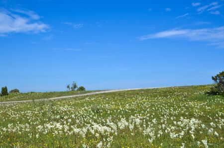 oland: Bright summer landscape on the island Oland in Sweden