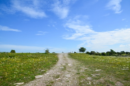 oland: Dirt road in summer meadow at the island Oland in Sweden